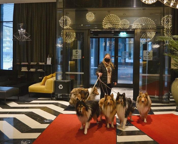 Meidän collielauma valmiina viettämään uuttavuotta Clarion Aviapoliksen lentokenttähotellissa.